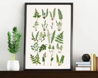Wall art print ferns collection, White paper print, Giclee print wall decor, Green nature study,Home decor BFL213WA4