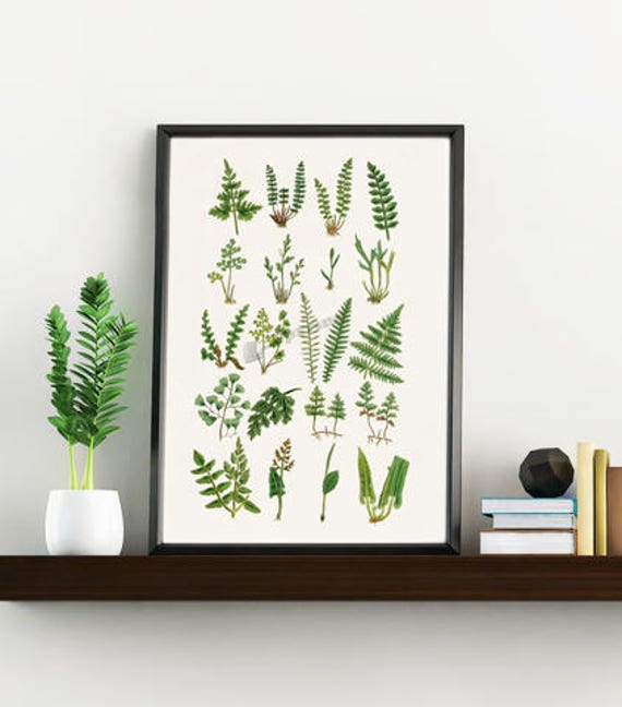Wall art print ferns collection, White paper print, Giclee print wall decor, Green nature study,Home decor BFL213WA4
