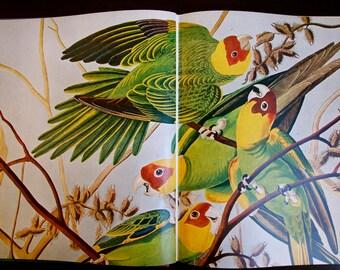 Audubon's Wildlife book 1964