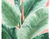 Rubber Plant - Sofie Seyah Illustration - Indoor Succulent Plant Botanical Watercolour - Art Print