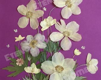 Pressed Flowers Photo 1