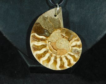 A Beautiful 200 Million Year Old Ammonite Fossil Made into a Pendant 5.57