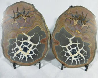 A Neat Pattern on This HUGE Cut and Polished Septarian Nodule! w/Stands 1200gr