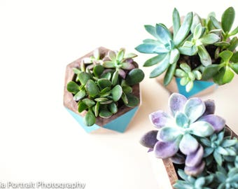 Succulent stock photography
