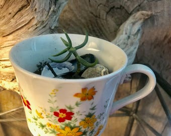 Succulent with Sea Shells in 3 Inch Vintage Coffee Cup Planter with Floral Pattern and Drainage Holes Great Windowsill Plant