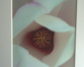 Sweet Magnolia, Mounted Photographic Print 9 x 7 inches. Flower, Magnolia, Close, Up, Petals, Original Print, Art, Home & Office Decor