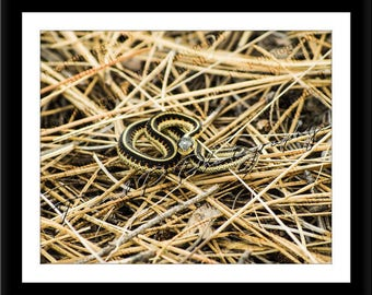 DIGITAL Download Photography, SNAKE PHOTO, wildlife photography, instant download, printable art, home decor, wall art, nature photography
