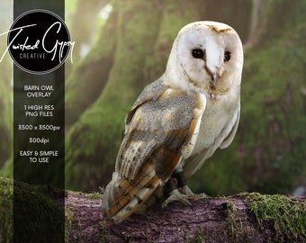 Barn Owl Overlay - PNG Digital Overlay for Photographers