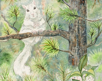 White Squirrel / Black Pine -- Giclee Print from original watercolor