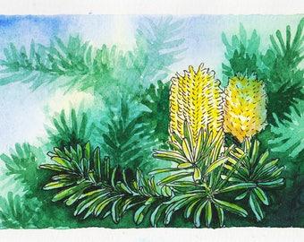 Original watercolour painting : Banksia Flowers