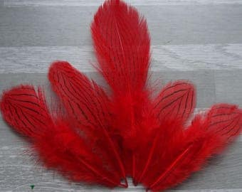Set of 10 Red dyed silver pheasant feathers