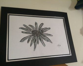Charcoal SoftPastel Daisy Flower Sketch Drawing A4