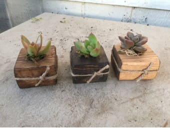 20 Succulent favors in small wood planter. Country, Rustic, bridal shower, baby shower, special event, DIY kit