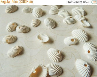 5% off Craft Shells, Jewelry Charms, Beach Wedding Decorations, Nautical Decor, Seashells with Holes