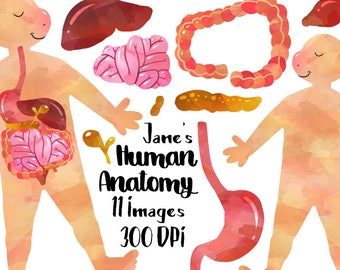 Human Anatomy Clipart - Digestive System Download - Instant Download - Watercolor Organs - Education - Stomach - Intestines - and more!