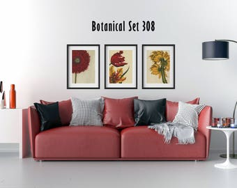 Botanical Print Set of 3, Framed Botanical Prints, Modern Botanical Wall Art, Wildflowers, Red Flowers, Yellow Flowers