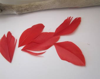 Set of 5 red feathers