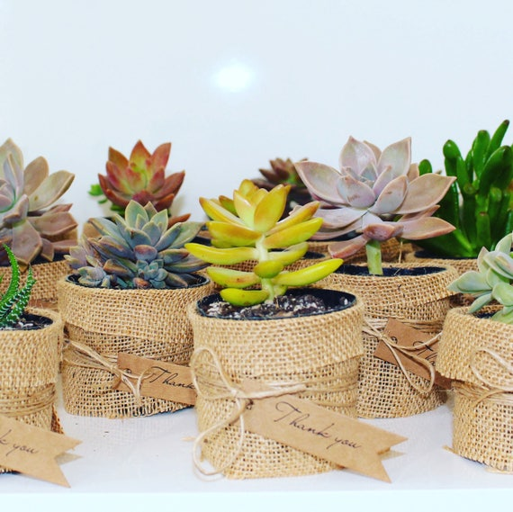 Christmas Gifting Ideas - Hessian Succulents