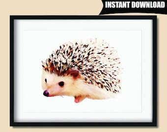 Hedgehog Print, Hedgehog Nursery, Woodland Nursery Print, Hedgehog Printable, Hedgehog Wall Art, Hedgehog Art, Nursery Wall Decor (P55)