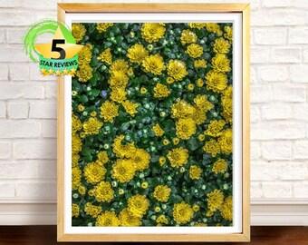 Yellow Flower Print, Flower Wall Art, Botanical Print, Spring Decor, Floral Photography, Spring Green, Nature Photo, Yellow Decor,Home Decor