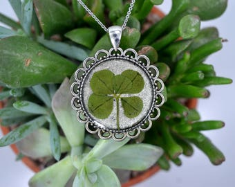 Genuine RARE 5 Leaf Clover Necklace [SP 015] / Stainless Steel / Lucky White Clover Pendant / Triforium Repens Gift / Good Luck Charm