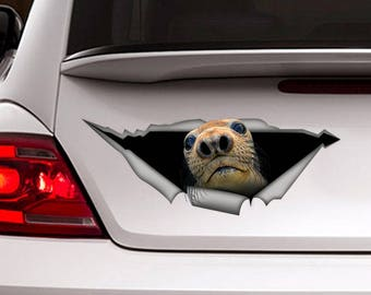 Harbor Seal decal , Vinyl decal, Harbor sticker, funny  decal, animal sticker