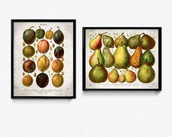 Fruit Vintage Print Set of 2 - Plum Pear Prints - Fruit Print - Fruit Poster - Fruit Art - Fruit Picture - Plum Print - Pear Print - Kitchen