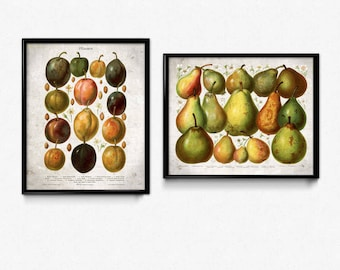 Fruit Vintage Print Set of 2 - Plum Pear Prints - Fruit Print - Fruit Poster - Fruit Art - Fruit Picture - Plum Print - Pear Print - Kitchen