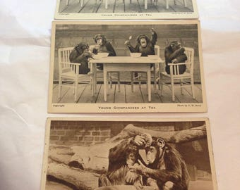 Collection of 3 Edwardian Vintage Postcards London zoo Regents Park CHIMPANZEES
