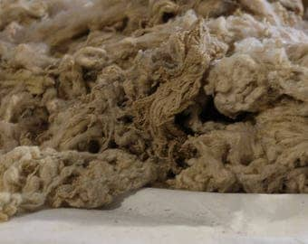 Wool of Shetland sheep, beige