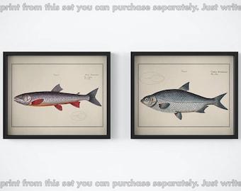 Nautical print, Set of 2 prints, Fish prints, Vintage art poster, Fish art prints, Antique animal print, Printable wall art, 11x14, 8x10