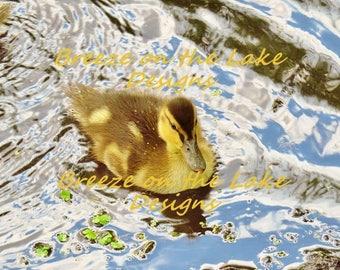 Duckling photo, printable download, nursery decor, baby duck, wildlife images, baby birds, nature art, bird decor, instant download art
