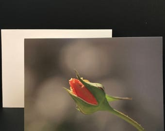 Single or 4pk Blank Note Cards - Pink Rose Bud