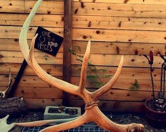 Elk Horn Sculpture