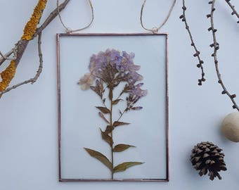 Pressed flower frame, Pressed plants suspended between glass, Double Sided Glass Frame, Gift for nature lovers, ready to ship