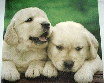 Napkin 2 labradors