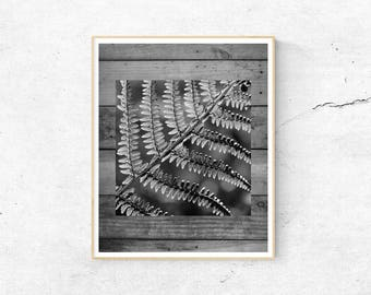 Black and White Print, Fern Print, Fern Leaf Print, Wood Print, Nature Print, A2 Print, ISO Print, Black and White Poster, Digital Download