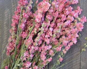 Pink Larkspur | Dried Larkspur | Larkspur Flowers | Pink Flowers