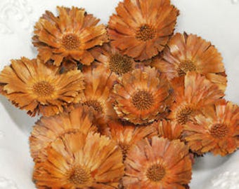 Dried Protea Flower Heads | Dried Flower Heads | Natural Decorations