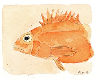 Scorpion fish. Red sea scorpion fish. Original watercolor