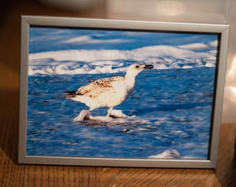 Provincetown Gull #1 5x7 framed color photo