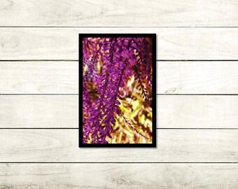 Crazy In Love, Floral Photography, A3 Unframed High Gloss 140gsm, wall art, Unframed photo, A3 (29.7cm x 42cm), Flower print, Modern Art