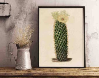 Vintage cactus botanical Illustration Printable Art - Single Print #281 - INSTANT DOWNLOAD