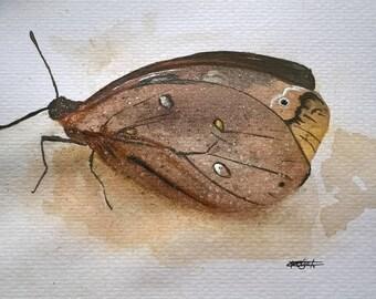 Original Watercolor Art Burtterfly