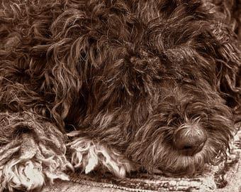 Sad dog digital photo (sepia)