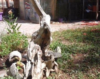 Driftwood Driftwood