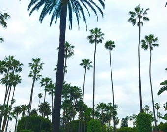 Palms of Beverly Hills Photo Print
