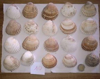 10 c) ocean shells, grass, clam shell