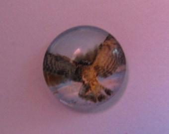 Glass cabochon 12mm Owl theme