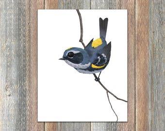Yellow-Rumped Warbler Bird Print